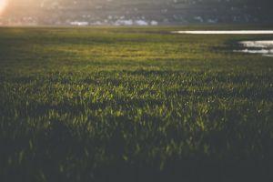 close-up blur growth landscape focus grassland nature environment grass field field