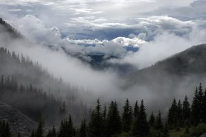 cloudy pine trees fir trees dawn idyllic sky tranquil misty forest nature