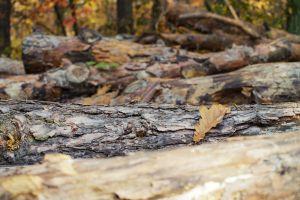 color rough woods landscape flora park maple close-up texture logs