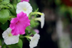 colors blurred background blooming bloom garden growth beautiful bright flowers close-up