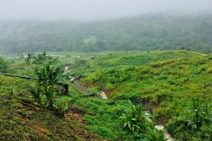 colour growing grass tropical mountain lush field farmland green landscape