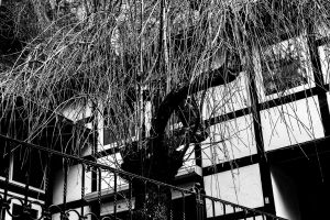 composition dramatic branches architecture black and white tree germany art nature natural