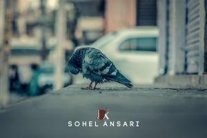 cool shops blurr duck bird pigeon road