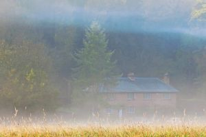 country house hedgerow misty morning woodland misty misty woods country lane trees
