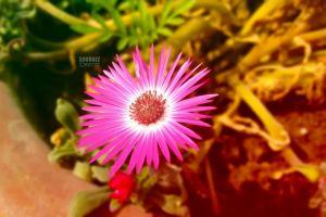 couple photographers shubhzzeditzz techishubhzz fashion model photo editing macro photography nature love reading