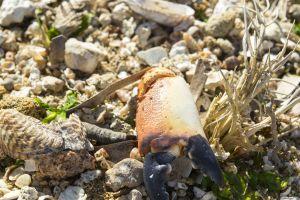 crab minimalist focus summer sea italy beach