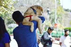 cute animal mammal canine adorable golden retriever pet dog carry person