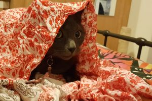 cute blanket cat cute animals hiding