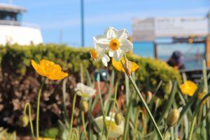 daisy flowers flower bloom