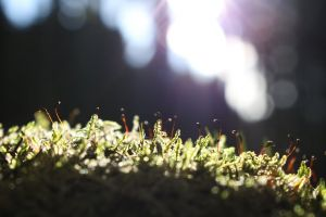 dawn landscape macro focus blur environment weeds forest flora grass