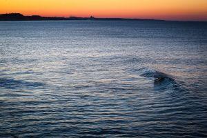 dawn seascape peaceful ocean wave tranquil waveform landscape beach sky