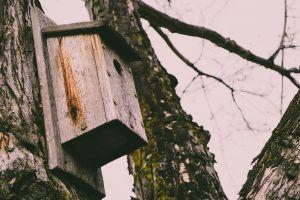 daylight environment decay building light trees nature wooden season bark