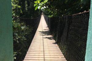 daylight nature long narrow trees bridge nature park