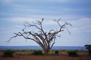 dead tree tree minimalism