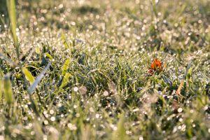 dew green grass growth plant wet