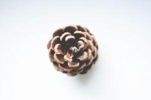 disjunct conifer moody fruit brown clean food minimalism color simple