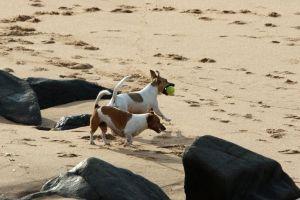dog friends play holiday beach man's best friend dogs nature swim ocean