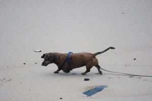 dog nature swim beach dogs ocean animals man's best friend holiday play