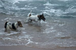 dogs dog holiday swim nature play ocean friends pet animals
