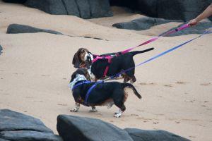 dogs swim holiday pet animals friends play beach man's best friend ocean