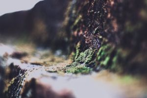 dripping environment colors scenic colorful water landscape blurred background close-up blur