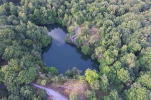 drone footage drone path forest drone cam foot path trees footpath flying forest path