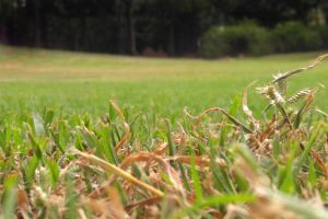 dry grass green low angle photography park nature photography trees yellow grass nature park nice photography
