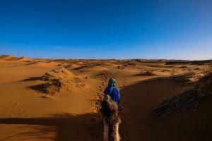 dune desert dry sand blue sky camel arid hot daylight