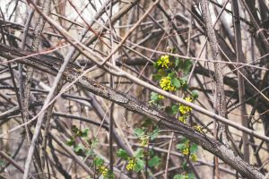 environment flowers bright rough plants twigs branch color nature wildlife