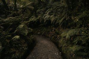 environment path fern plants forest rainforest