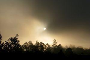 evening tree sun dawn dark sky fog light nature mist