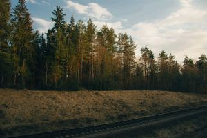 evergreen conifers trees environment pine trees railway forest fir trees railway line woods