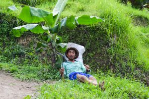 everyday people with a scythe green hard work scythe banana tree peasant resting balinese work