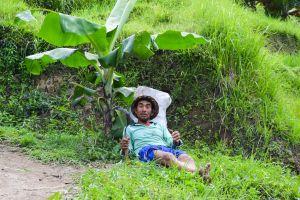 everyday people with a scythe green hard work scythe banana tree peasant resting balinese work