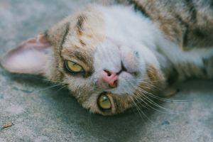 eye young little hair animal nose cat fur pet portrait