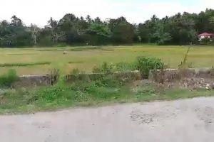 farm grass windy road field farmland