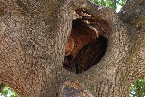 farm tree tree trunk nature green