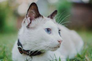 feline cute mammal little adorable cat animal whiskers pet kitty