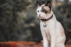 feline kitty domestic cat adorable animal little cute mammal pet cat