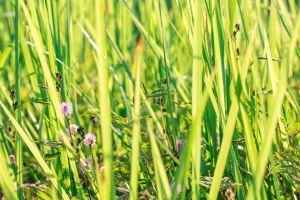 field fresh bright floral green summer flower petal white meadow