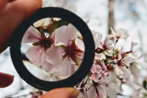 fingers colors macro beautiful blurred background nature magnifying glass blooming person growth