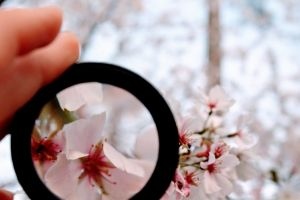 fingers petals garden macro blossom blooming growth blur colors person