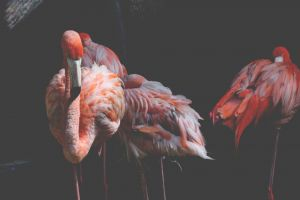 flamingos wildlife nature exotic color aviary wild neck water feathers