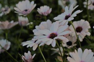 floer blue flowers bunch flowers bunch of flowers
