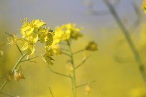 flora biology season husk focus growth beautiful petals nature blossom