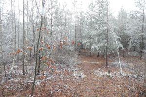 flora frost snow down white plant color landscape background nature