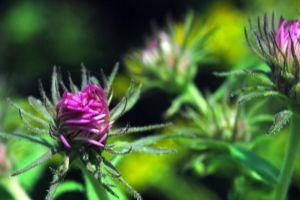 flower green bloom purple
