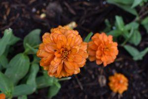 flower orange cool