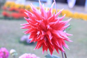 flower petal blossom flora macro bloom plant