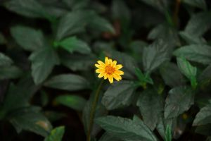 flowering plant natural beautiful flowers nature beauty